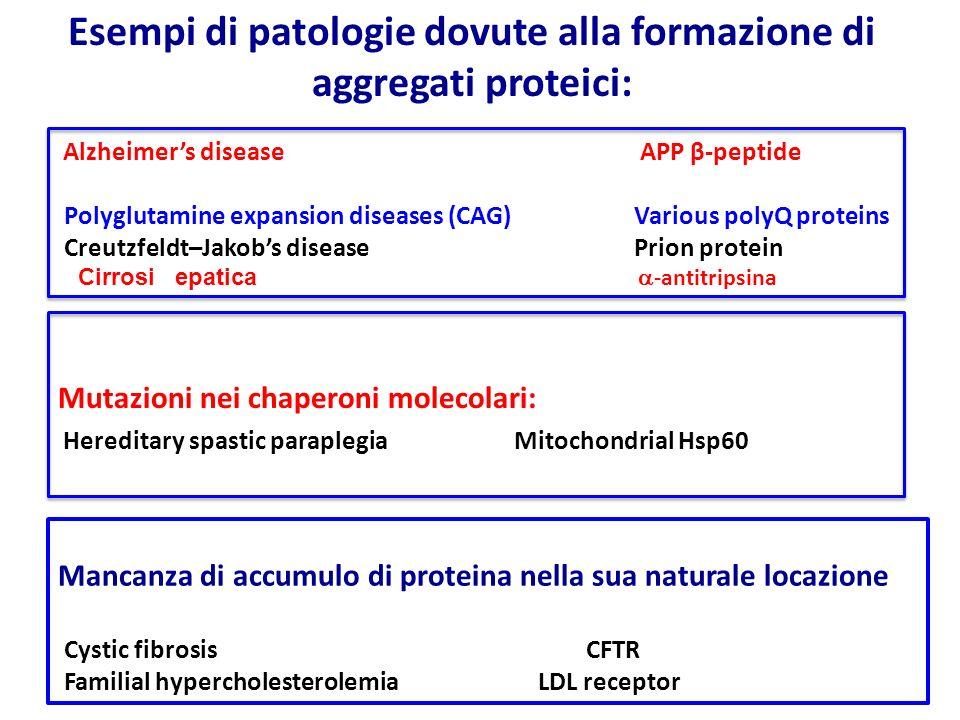 Alzheimer's disease APP β-peptide Polyglutamine expansion diseases (CAG)Various polyQ proteins Creutzfeldt–Jakob's diseasePrion protein Cirrosi epatic