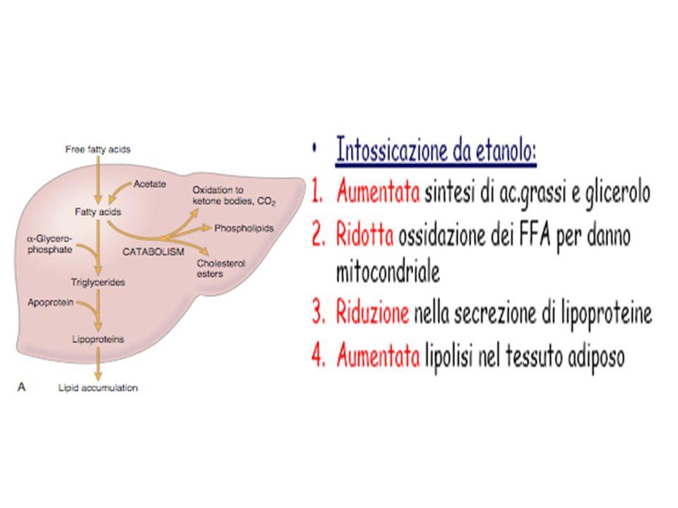 La Steatosi è provocata generalmente da cause esogene (agenti vari o a carenza di fattori vari) Tipi di steatosi: da etanolo da sovraccarico da aumento di sintesi di acidi grassi da carenza di proteine da carenza di fosfolipidi per inibizione della sintesi proteica da tossine da CCl 4 da blocco della secrezione