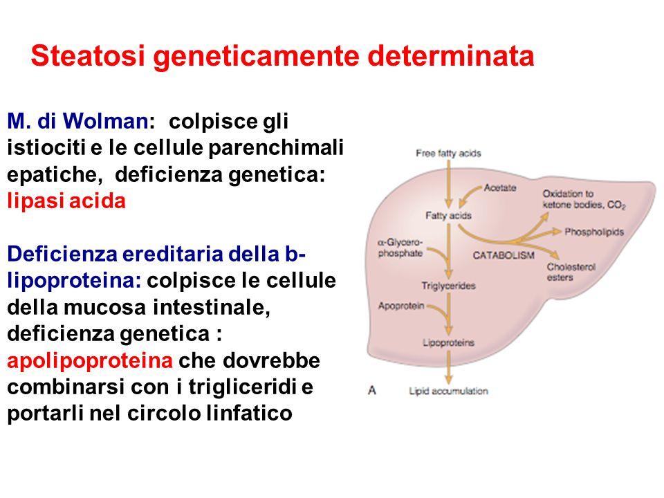 M. di Wolman: colpisce gli istiociti e le cellule parenchimali epatiche, deficienza genetica: lipasi acida Deficienza ereditaria della b- lipoproteina