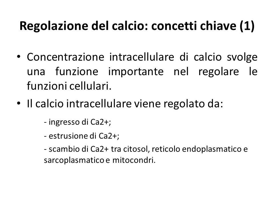 Regolazione del calcio: concetti chiave (1) Concentrazione intracellulare di calcio svolge una funzione importante nel regolare le funzioni cellulari.