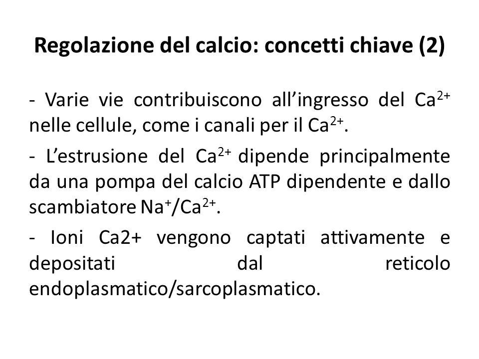 Regolazione del calcio: concetti chiave (2) - Varie vie contribuiscono all'ingresso del Ca 2+ nelle cellule, come i canali per il Ca 2+. - L'estrusion