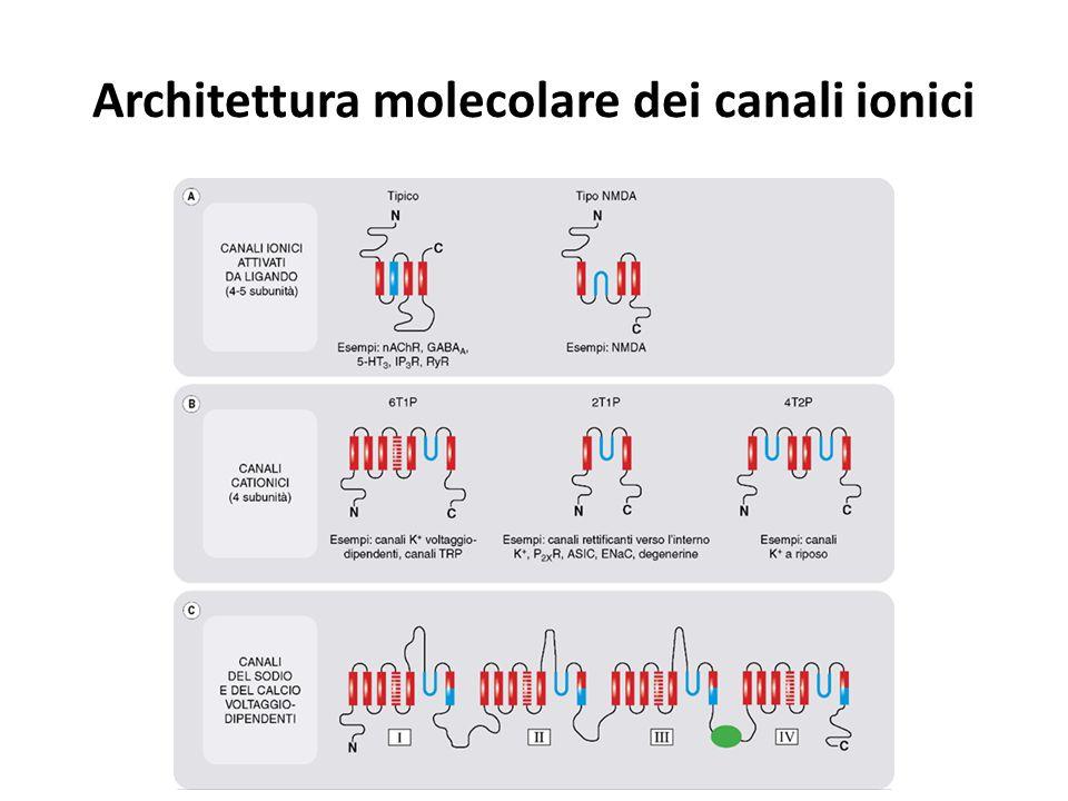 Canali ionici associati con effetto eccitatorio o inibitorio delle membrane ed effetto di alcuni farmaci o di altri agenti