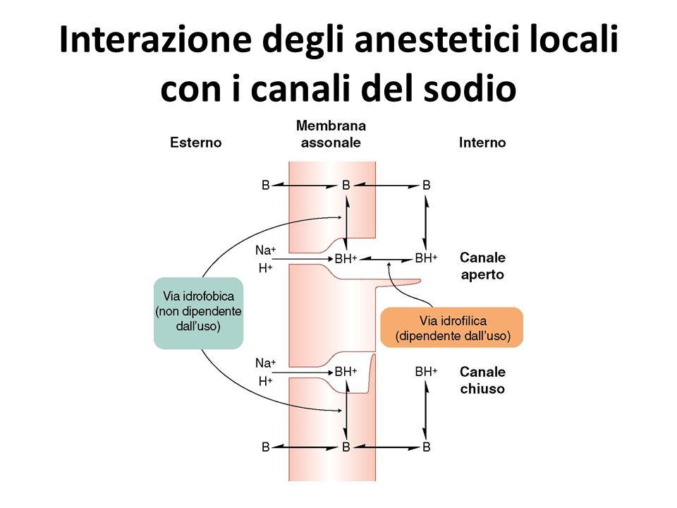 Interazione degli anestetici locali con i canali del sodio