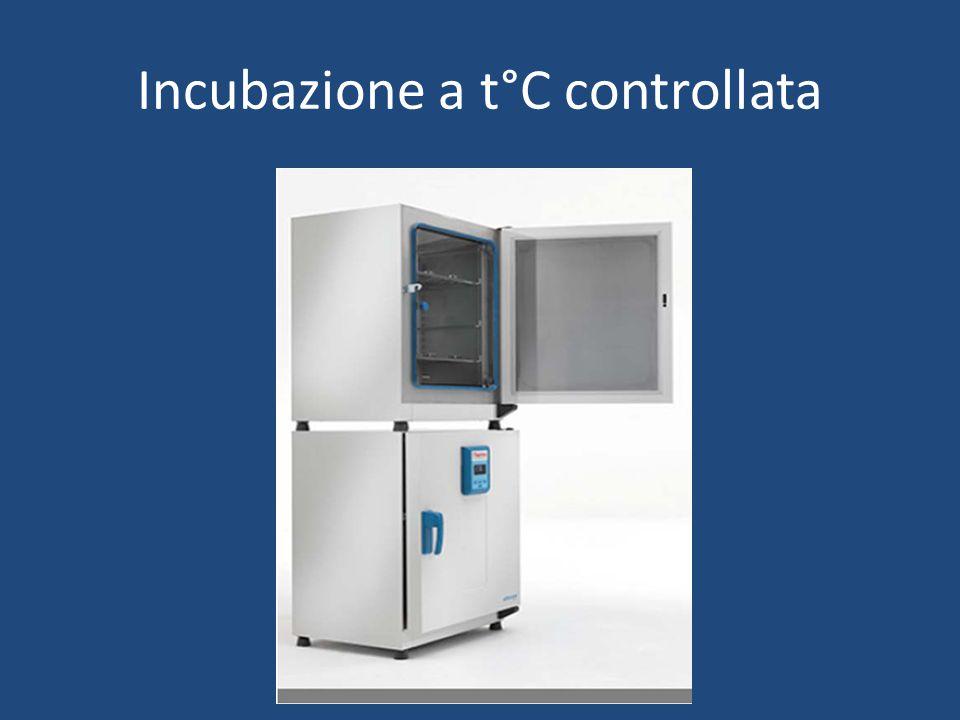Incubazione a t°C controllata