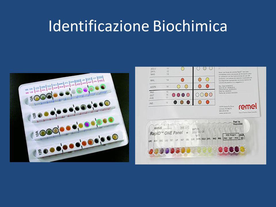 Identificazione Biochimica