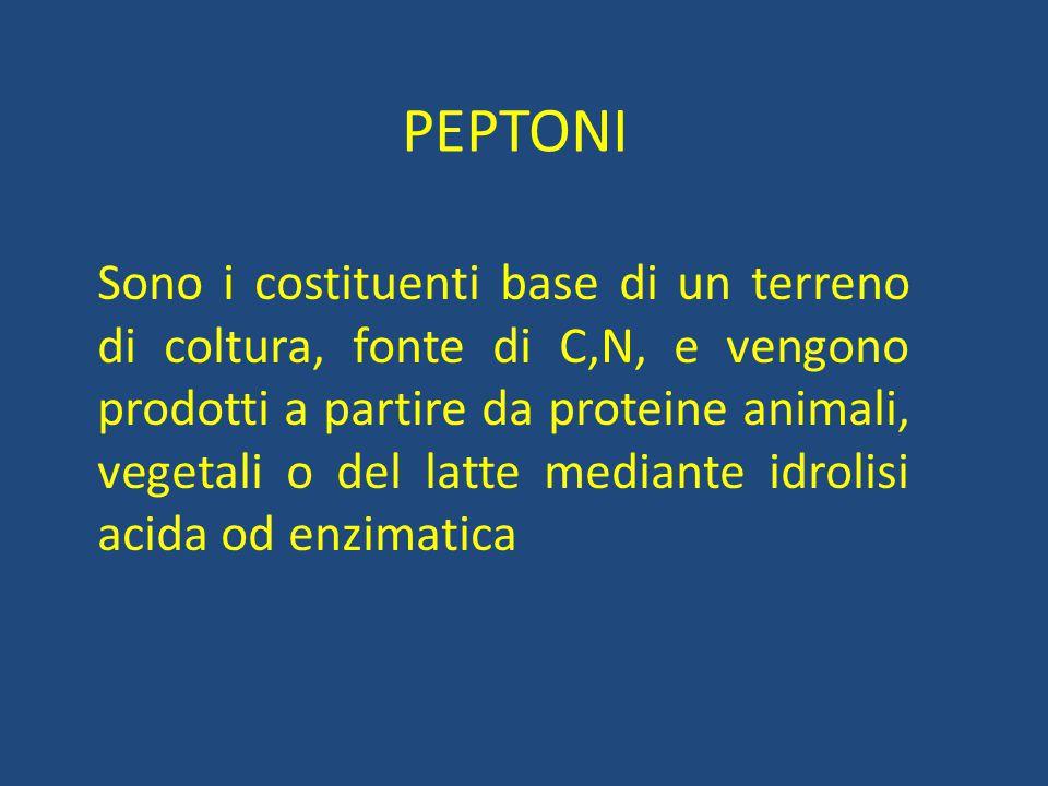 PEPTONI Sono i costituenti base di un terreno di coltura, fonte di C,N, e vengono prodotti a partire da proteine animali, vegetali o del latte mediant