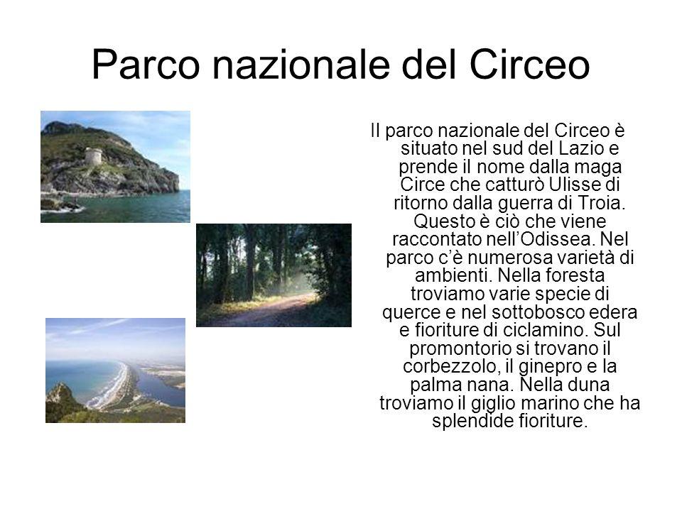 Parco nazionale del Circeo Il parco nazionale del Circeo è situato nel sud del Lazio e prende il nome dalla maga Circe che catturò Ulisse di ritorno dalla guerra di Troia.