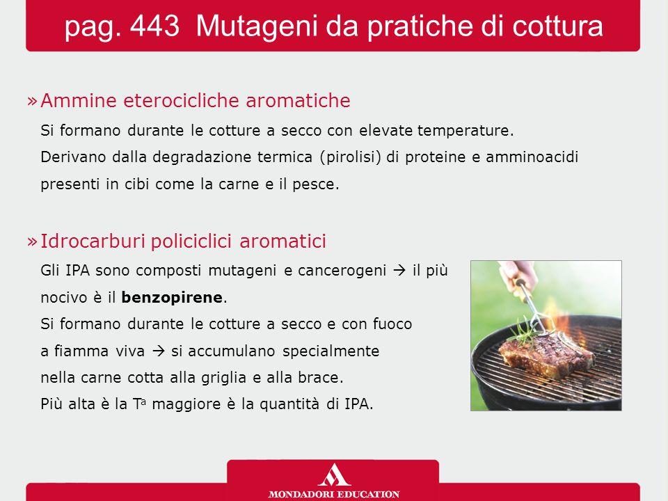 »Ammine eterocicliche aromatiche Si formano durante le cotture a secco con elevate temperature. Derivano dalla degradazione termica (pirolisi) di prot