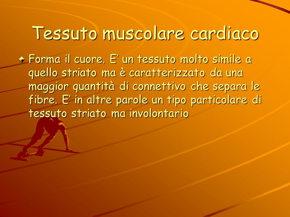 Tessuto muscolare liscio Questi muscoli lisci sono costituiti da tessuto muscolare liscio e controllano il movimento degli organi interni sono sotto i