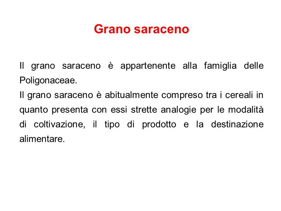 Grano saraceno Il grano saraceno è appartenente alla famiglia delle Poligonaceae.