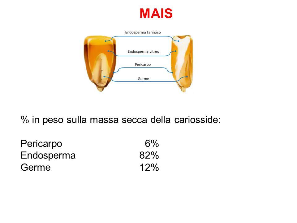 MAIS % in peso sulla massa secca della cariosside: Pericarpo 6% Endosperma 82% Germe 12%