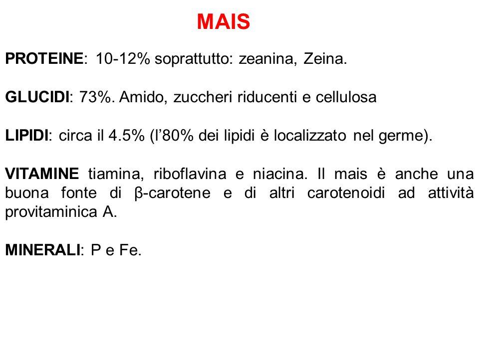 MAIS PROTEINE: 10-12% soprattutto: zeanina, Zeina.