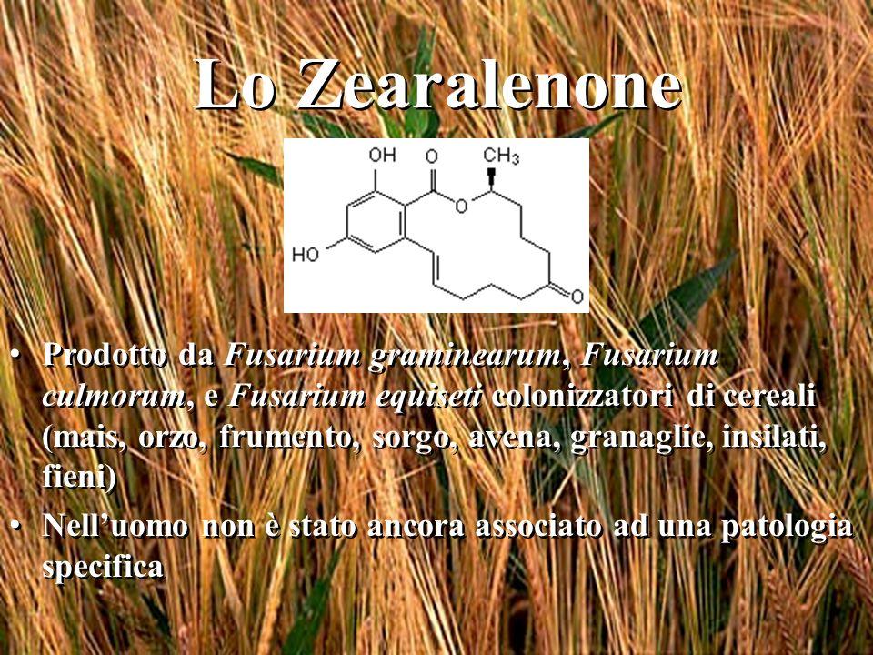 Lo Zearalenone Prodotto da Fusarium graminearum, Fusarium culmorum, e Fusarium equiseti colonizzatori di cereali (mais, orzo, frumento, sorgo, avena,