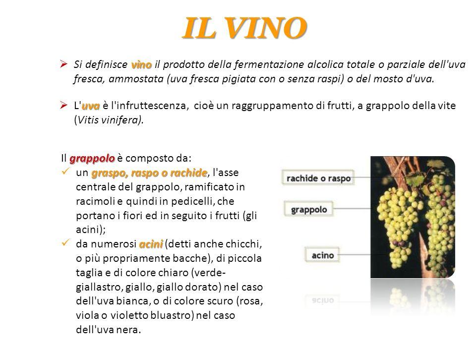 IL VINO vino  Si definisce vino il prodotto della fermentazione alcolica totale o parziale dell'uva fresca, ammostata (uva fresca pigiata con o senza