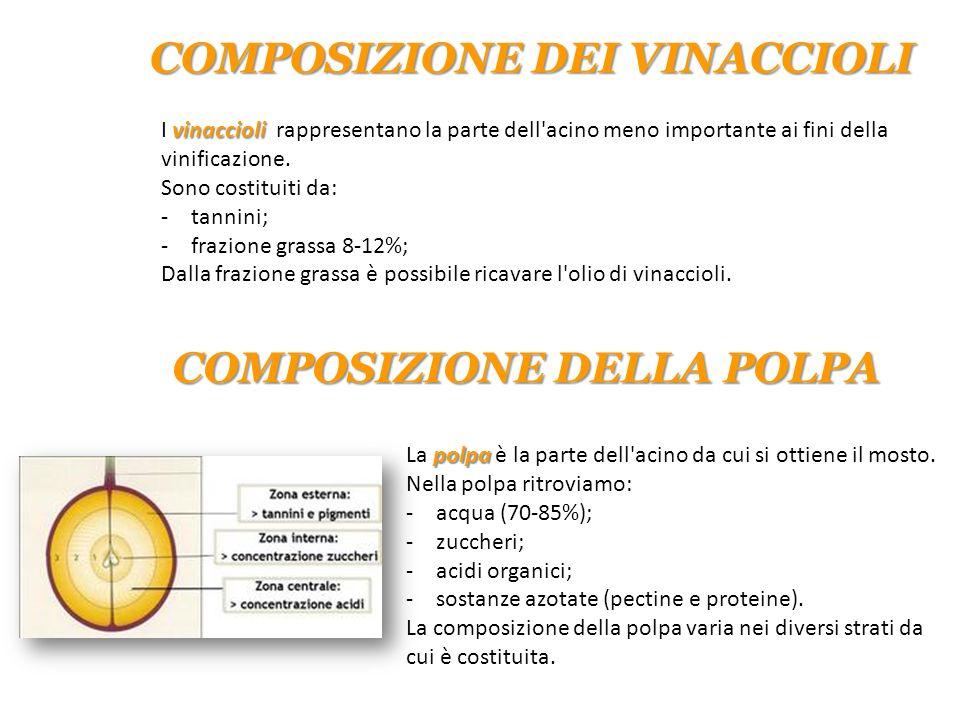 vinaccioli I vinaccioli rappresentano la parte dell'acino meno importante ai fini della vinificazione. Sono costituiti da: -tannini; -frazione grassa