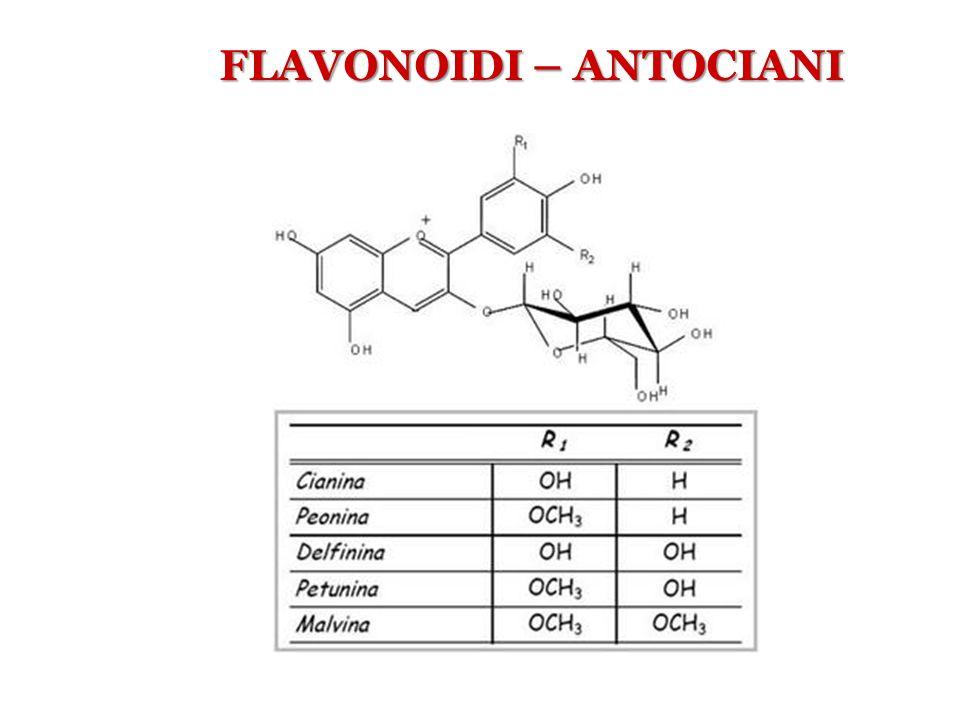 FLAVONOIDI – ANTOCIANI