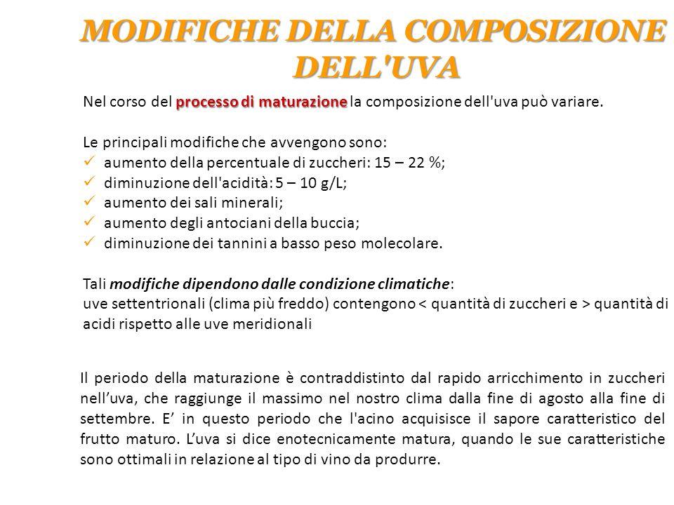 processo di maturazione Nel corso del processo di maturazione la composizione dell'uva può variare. Le principali modifiche che avvengono sono: aument