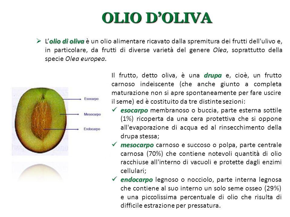 OLIO D'OLIVA olio di oliva  L'olio di oliva è un olio alimentare ricavato dalla spremitura dei frutti dell'ulivo e, in particolare, da frutti di dive