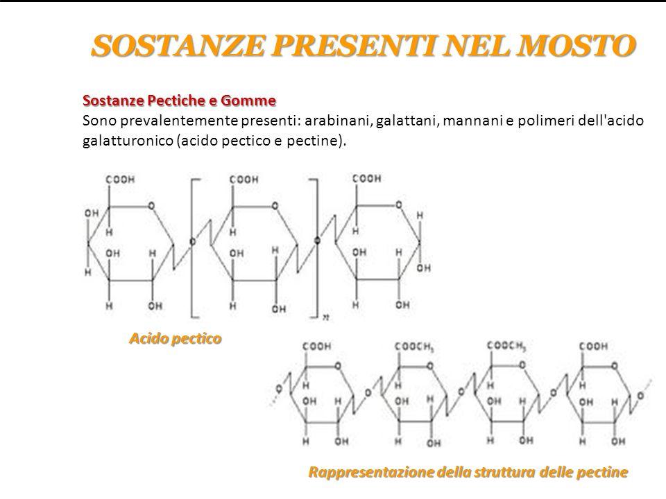 Sostanze Pectiche e Gomme Sostanze Pectiche e Gomme Sono prevalentemente presenti: arabinani, galattani, mannani e polimeri dell'acido galatturonico (
