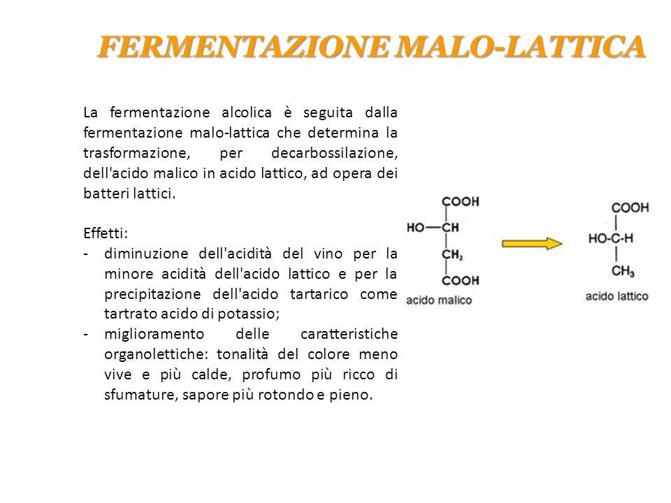 La fermentazione alcolica è seguita dalla fermentazione malo-lattica che determina la trasformazione, per decarbossilazione, dell'acido malico in acid
