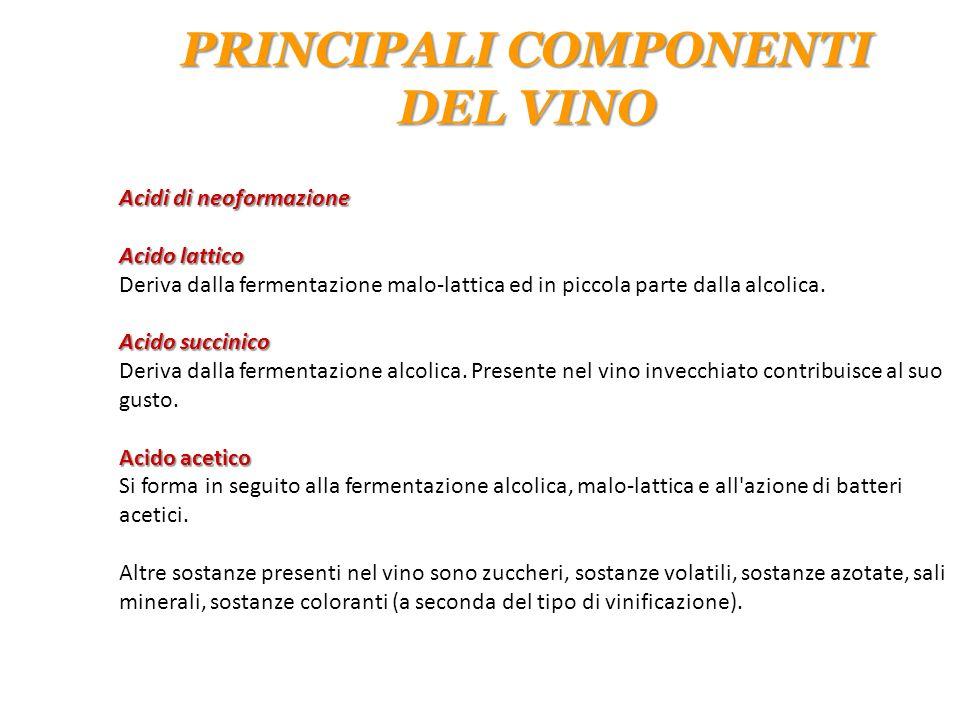 Acidi di neoformazione Acido lattico Deriva dalla fermentazione malo-lattica ed in piccola parte dalla alcolica. Acido succinico Deriva dalla fermenta