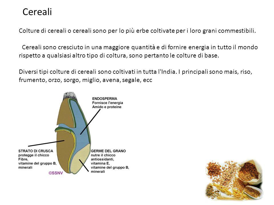 Cereali Colture di cereali o cereali sono per lo più erbe coltivate per i loro grani commestibili. Cereali sono cresciuto in una maggiore quantità e d