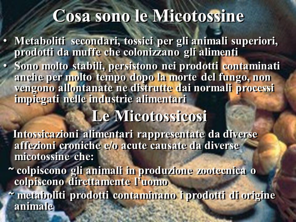 Cosa sono le Micotossine Metaboliti secondari, tossici per gli animali superiori, prodotti da muffe che colonizzano gli alimenti Sono molto stabili, p