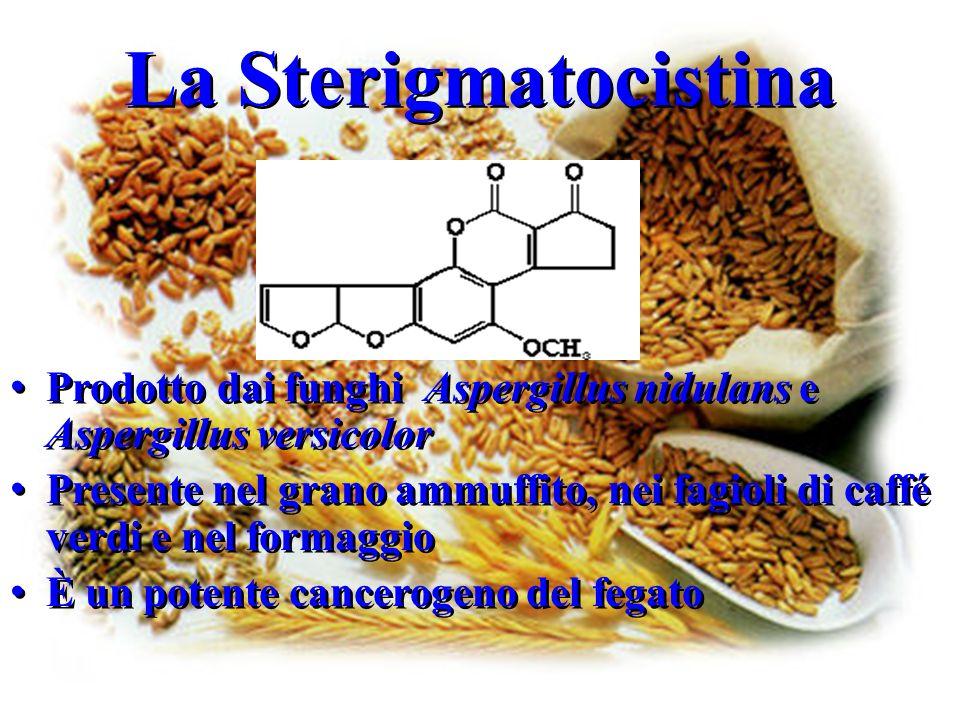 La Sterigmatocistina Prodotto dai funghi Aspergillus nidulans e Aspergillus versicolor Presente nel grano ammuffito, nei fagioli di caffé verdi e nel