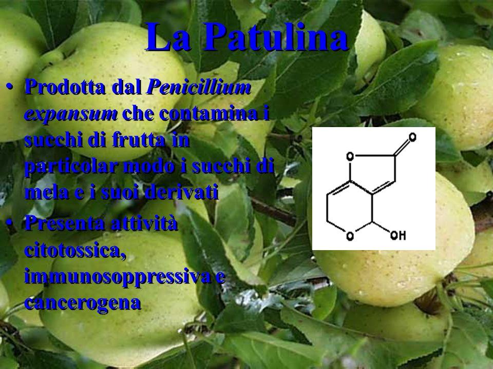 La Patulina Prodotta dal Penicillium expansum che contamina i succhi di frutta in particolar modo i succhi di mela e i suoi derivati Presenta attività