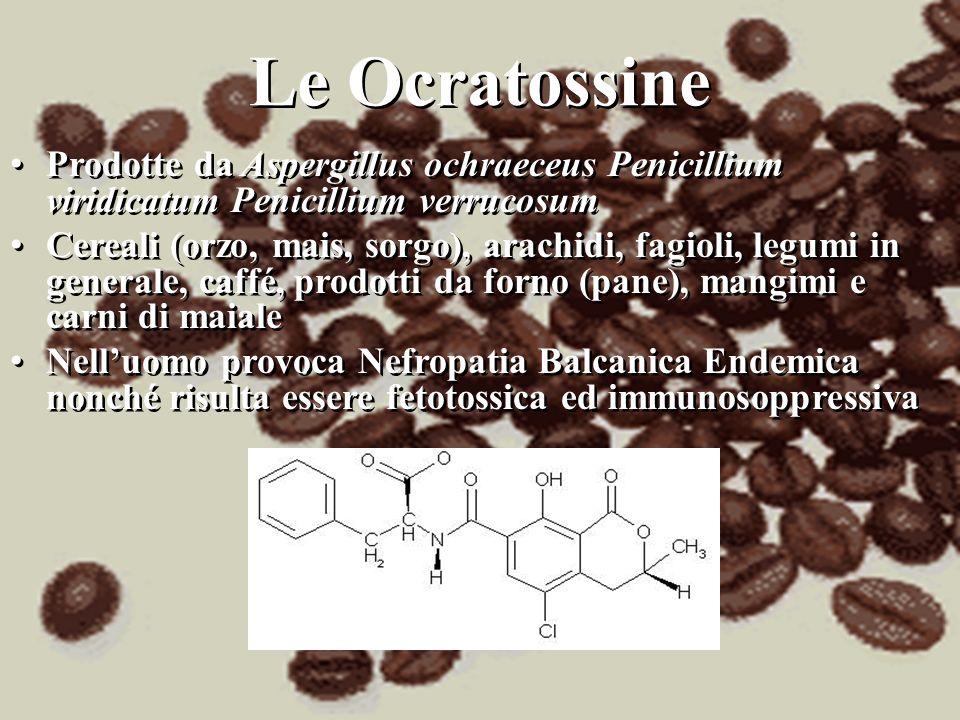 Le Ocratossine Prodotte da Aspergillus ochraeceus Penicillium viridicatum Penicillium verrucosum Cereali (orzo, mais, sorgo), arachidi, fagioli, legum