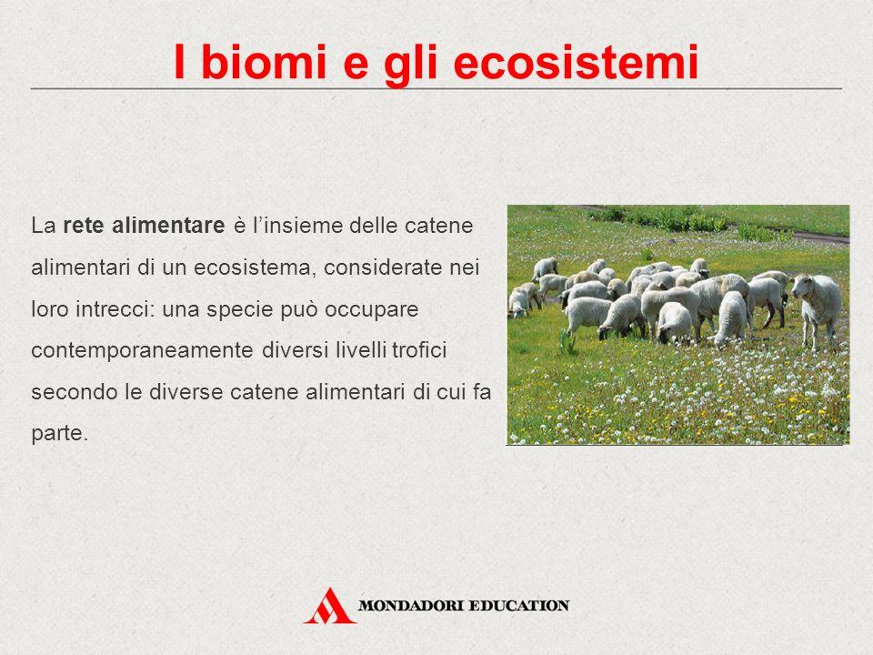 La rete alimentare è l'insieme delle catene alimentari di un ecosistema, considerate nei loro intrecci: una specie può occupare contemporaneamente div