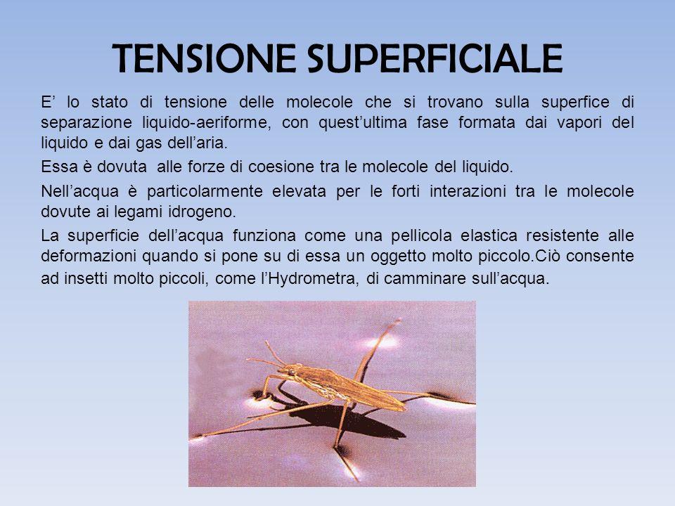 TENSIONE SUPERFICIALE E' lo stato di tensione delle molecole che si trovano sulla superfice di separazione liquido-aeriforme, con quest'ultima fase fo