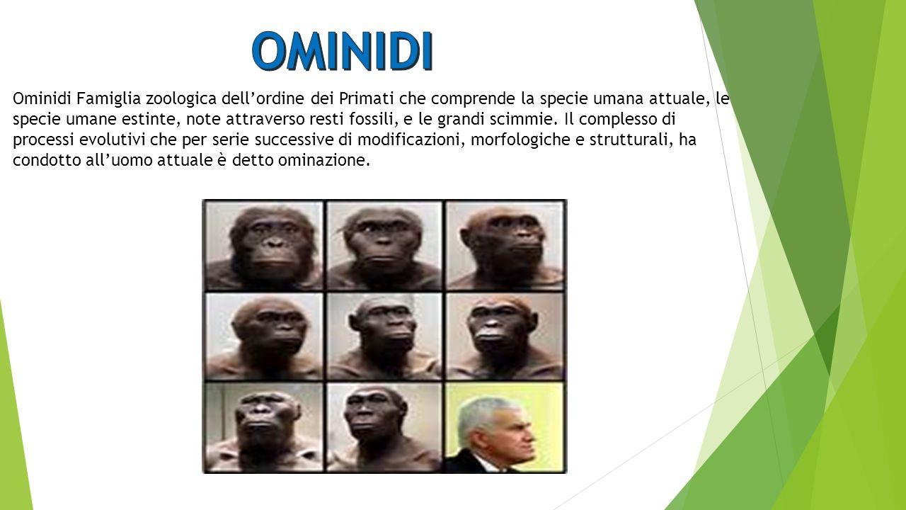 Ominidi Famiglia zoologica dell'ordine dei Primati che comprende la specie umana attuale, le specie umane estinte, note attraverso resti fossili, e le