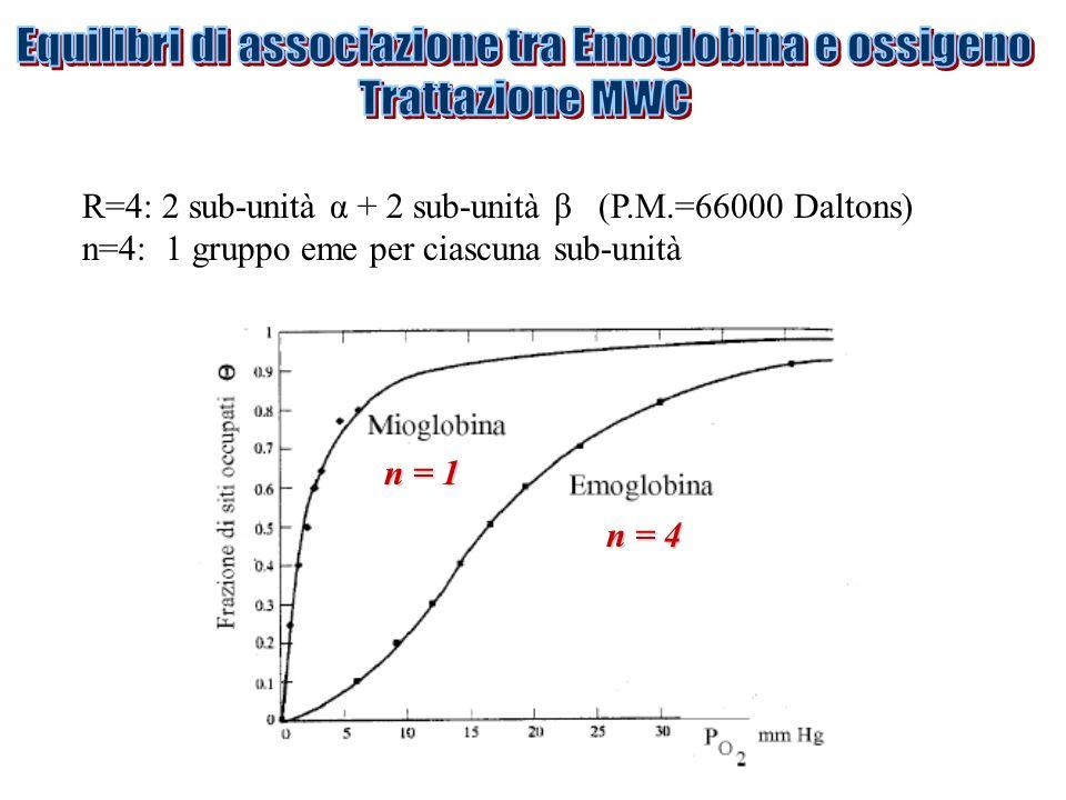 R=4: 2 sub-unità α + 2 sub-unità β (P.M.=66000 Daltons) n=4: 1 gruppo eme per ciascuna sub-unità n = 4 n = 1
