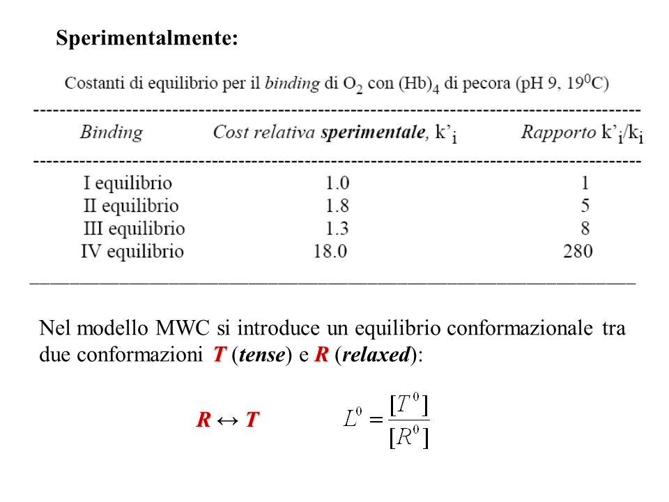 Sperimentalmente: T R Nel modello MWC si introduce un equilibrio conformazionale tra due conformazioni T (tense) e R (relaxed): R T R ↔ T