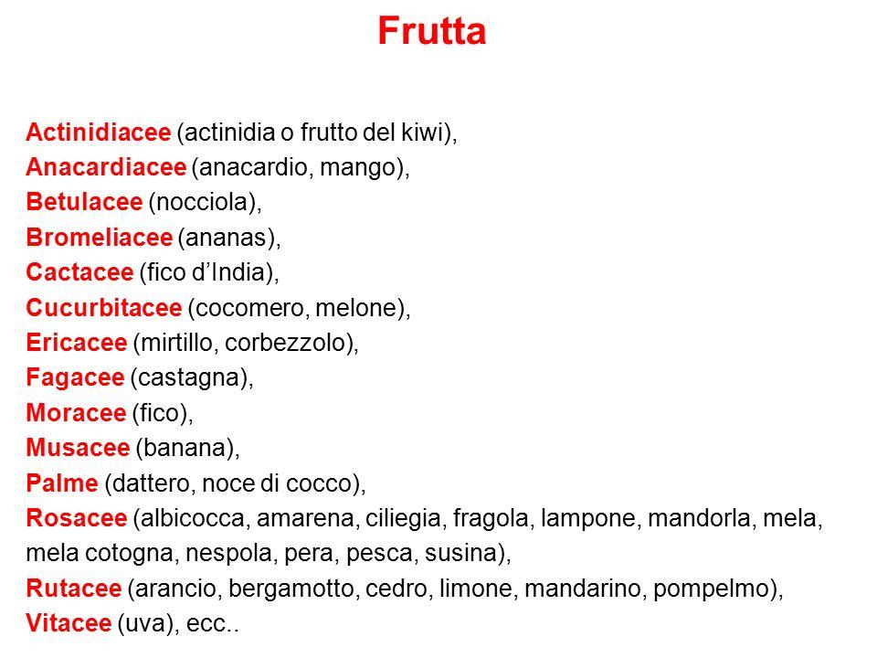 Frutta Actinidiacee (actinidia o frutto del kiwi), Anacardiacee (anacardio, mango), Betulacee (nocciola), Bromeliacee (ananas), Cactacee (fico d'India