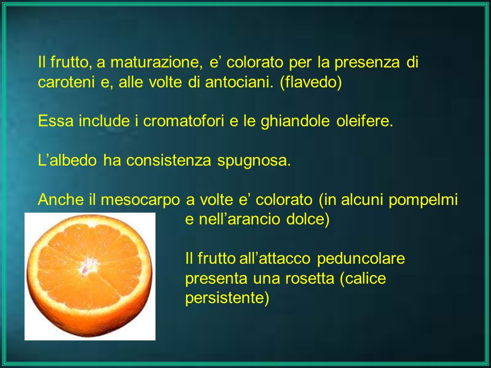 Il frutto, a maturazione, e' colorato per la presenza di caroteni e, alle volte di antociani. (flavedo) Essa include i cromatofori e le ghiandole olei