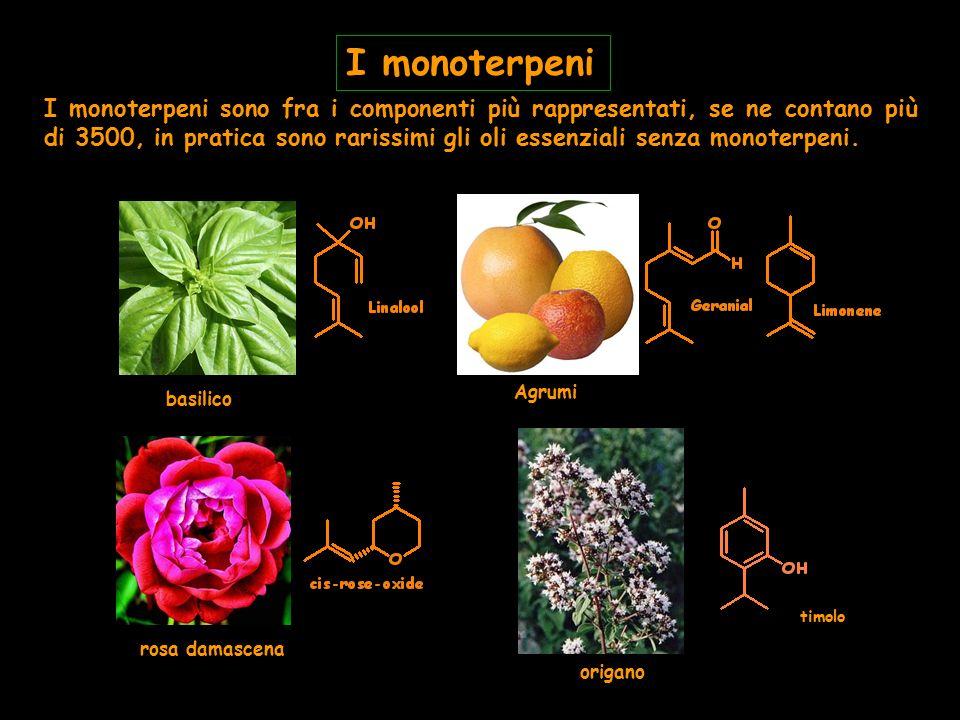 I monoterpeni sono fra i componenti più rappresentati, se ne contano più di 3500, in pratica sono rarissimi gli oli essenziali senza monoterpeni. I mo