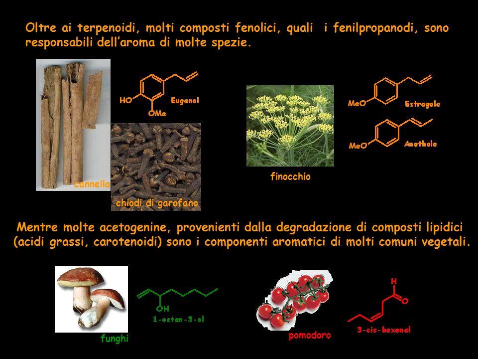 Oltre ai terpenoidi, molti composti fenolici, quali i fenilpropanodi, sono responsabili dell'aroma di molte spezie. cannella chiodi di garofano finocc