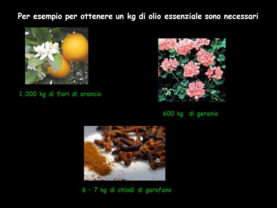 1.000 kg di fiori di arancio 600 kg di geranio 6 – 7 kg di chiodi di garofano Per esempio per ottenere un kg di olio essenziale sono necessari :