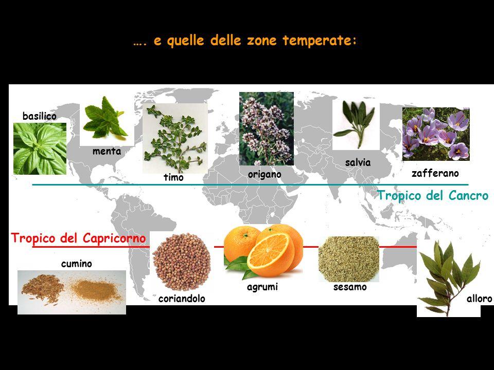Tropico del Capricorno Tropico del Cancro …. e quelle delle zone temperate: menta timo coriandoloalloro cumino salvia zafferano origano basilico sesam