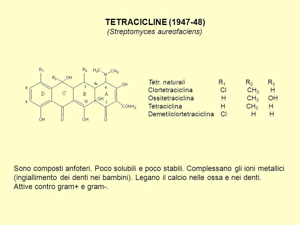 AMINOGLICOSIDI (1944-45) (Streptomyces griseus) Non sono assorbiti per via orale.