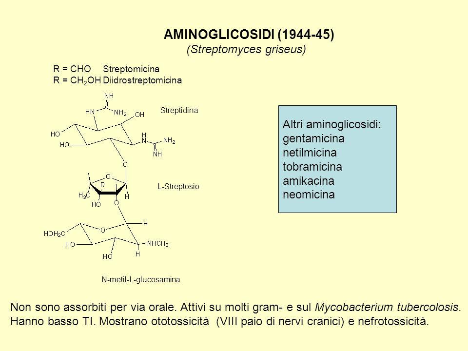 AMINOGLICOSIDI (1944-45) (Streptomyces griseus) Non sono assorbiti per via orale. Attivi su molti gram- e sul Mycobacterium tubercolosis. Hanno basso