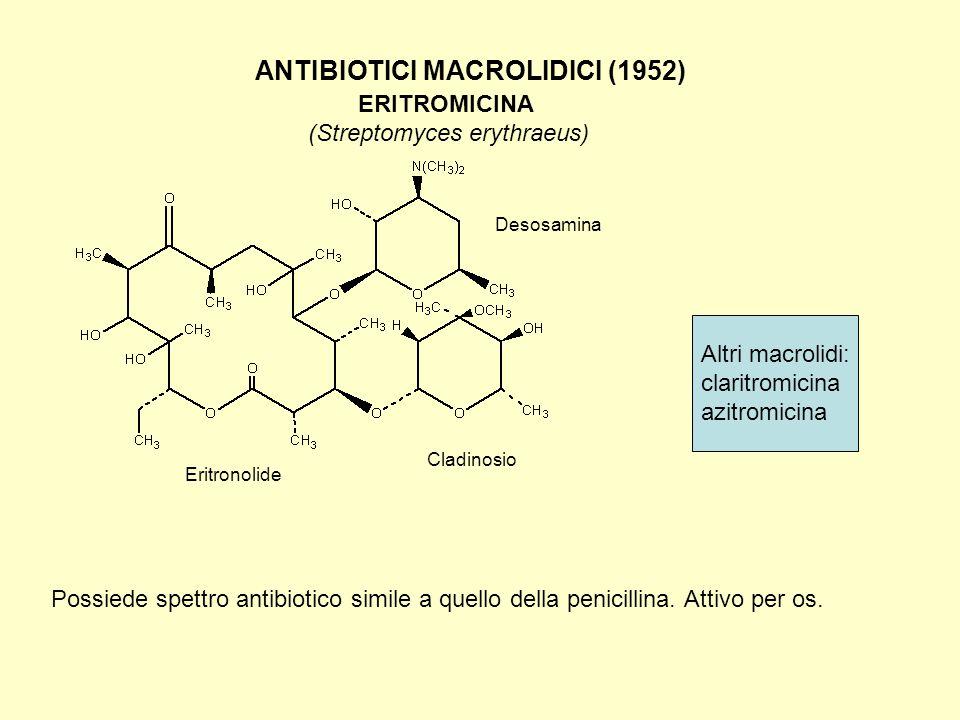 ANTIBIOTICI MACROLIDICI (1952) ERITROMICINA (Streptomyces erythraeus) Possiede spettro antibiotico simile a quello della penicillina. Attivo per os. E