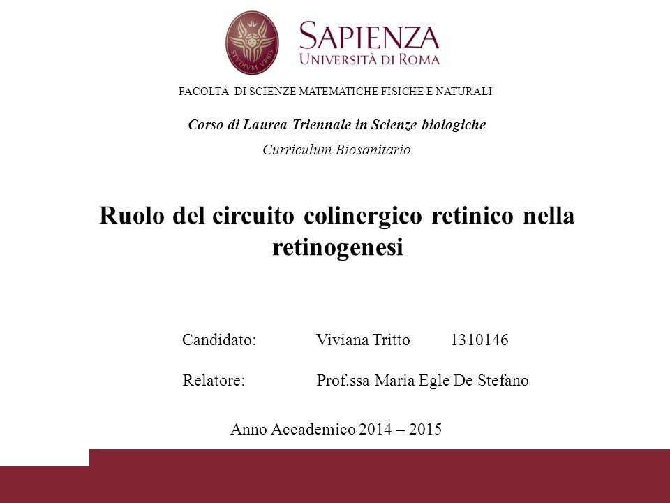 FACOLTÀ DI SCIENZE MATEMATICHE FISICHE E NATURALI Corso di Laurea Triennale in Scienze biologiche Ruolo del circuito colinergico retinico nella retino