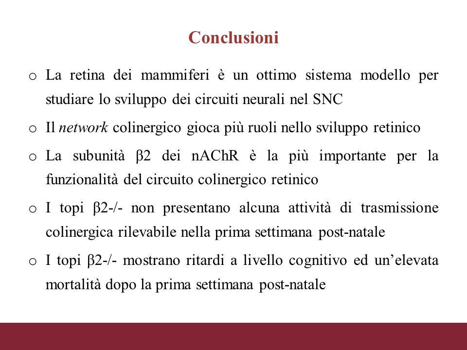 Conclusioni o La retina dei mammiferi è un ottimo sistema modello per studiare lo sviluppo dei circuiti neurali nel SNC o Il network colinergico gioca