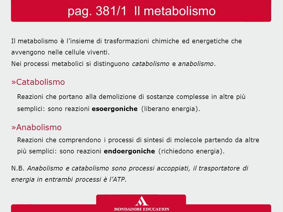 Le reazioni per l'ottenimento di energia a partire dagli alimenti costituiscono il metabolismo energetico.