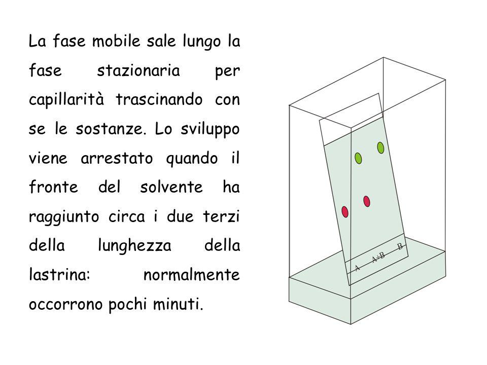 La fase mobile sale lungo la fase stazionaria per capillarità trascinando con se le sostanze. Lo sviluppo viene arrestato quando il fronte del solvent