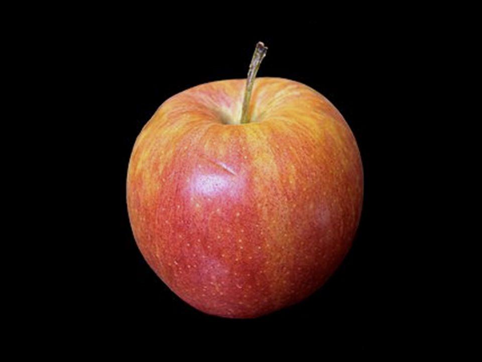 Modello genetico Modello epigenetico Modello farmacologico Nutrigenomica: il cibo è informazione per il nostro genoma Ad.