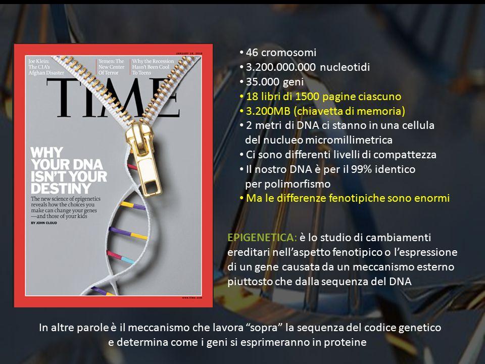 46 cromosomi 3.200.000.000 nucleotidi 35.000 geni 18 libri di 1500 pagine ciascuno 3.200MB (chiavetta di memoria) 2 metri di DNA ci stanno in una cellula del nuclueo micromillimetrica Ci sono differenti livelli di compattezza Il nostro DNA è per il 99% identico per polimorfismo Ma le differenze fenotipiche sono enormi EPIGENETICA: è lo studio di cambiamenti ereditari nell'aspetto fenotipico o l'espressione di un gene causata da un meccanismo esterno piuttosto che dalla sequenza del DNA In altre parole è il meccanismo che lavora sopra la sequenza del codice genetico e determina come i geni si esprimeranno in proteine